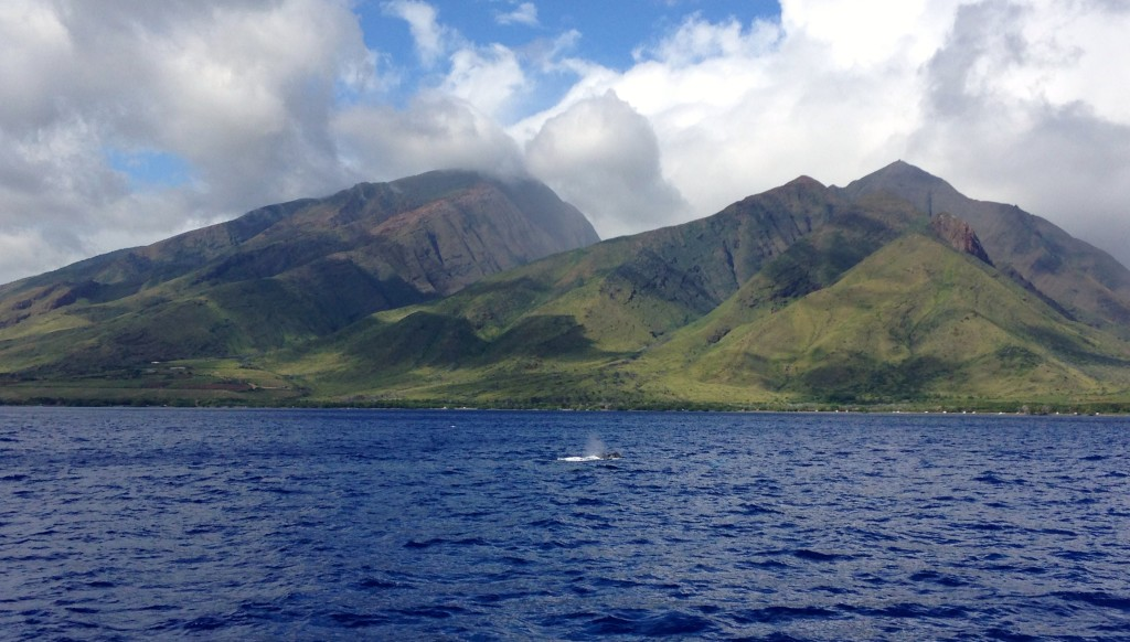 Whale Watching, Maui
