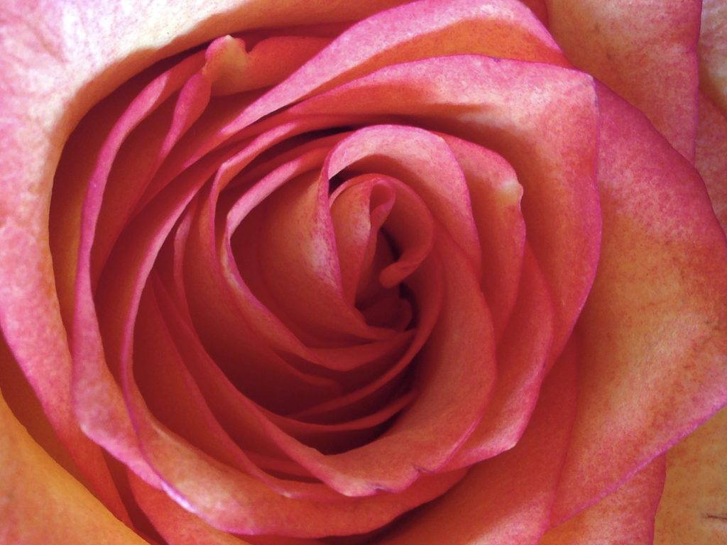 rose, reiki master, reiki training